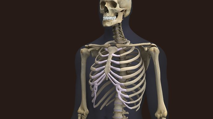 What are the components of human 3D models?
